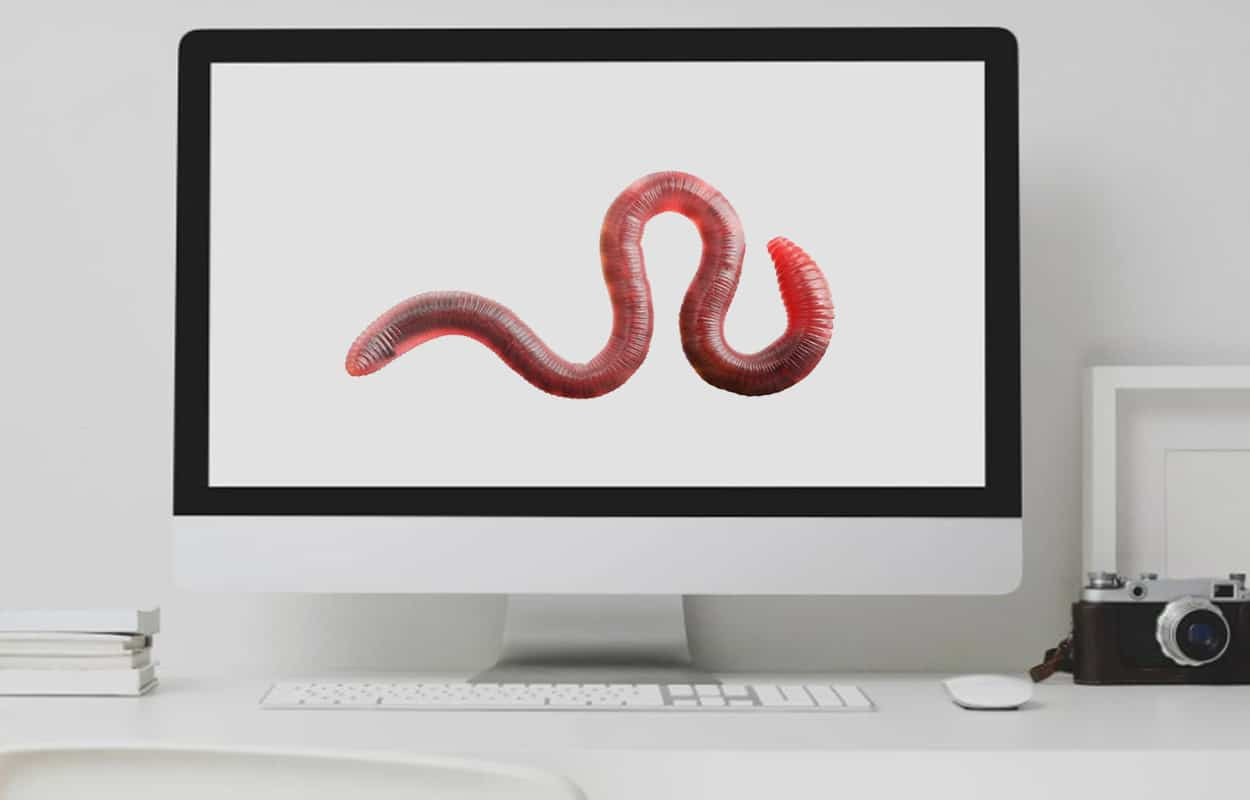 what is a computer worm?